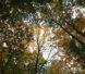 2017年10月紅葉の世界遺産「白神山地」