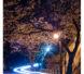 またまたお久しぶりです!桜の季節になりましたね!