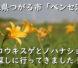 青森県つがる市にある「ベンセ湿原・ニッコウキスゲとノハナショウブ」を探しに行ってきました!の動画配信いたします。